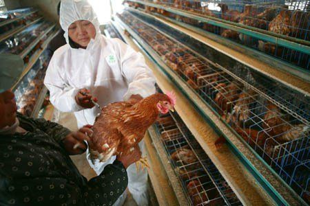 Vaccination; Preventive Protection for your Poultry Farm