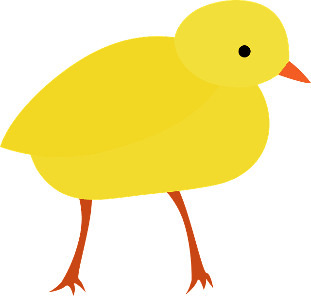 Factors that Prevent Pullets from Laying Eggs at the Appropriate Time