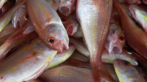 Business Opportunities in Fish Farming