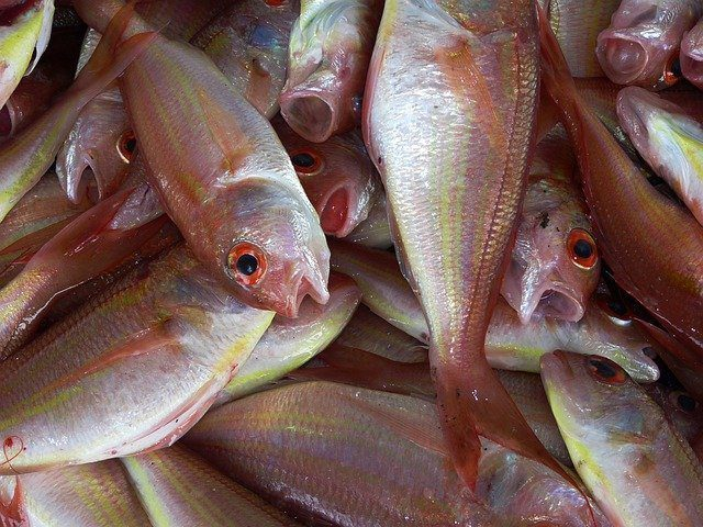 Business Opportunities in Fish Farming | Afrimash com - Nigeria