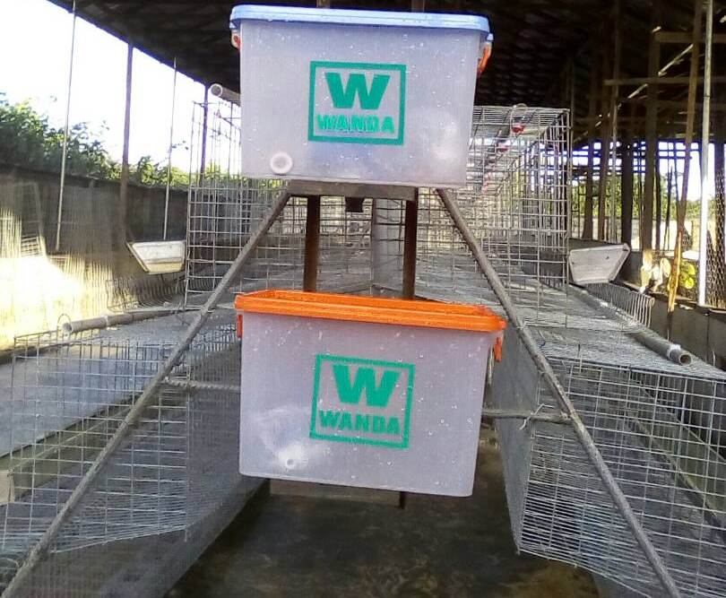 2 tiers battery cage