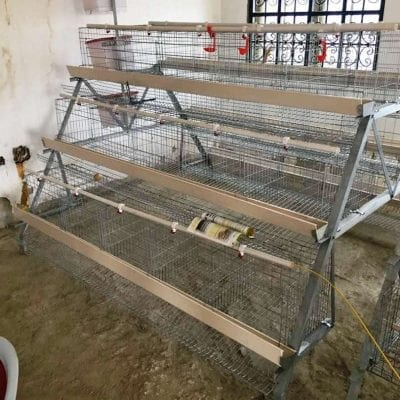 imported poultry cage