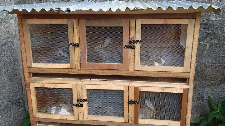 wooden rabbit cage
