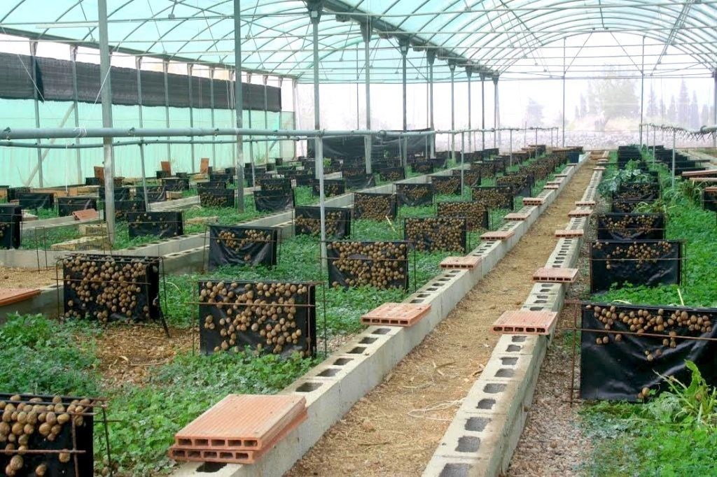 How To Start Profitable Snail Farming In Nigeria | Afrimash.com - Nigeria