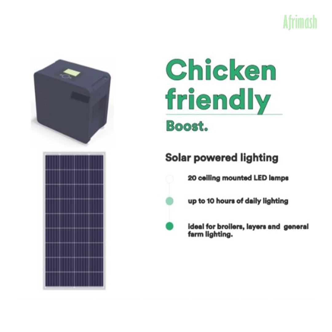 chicken friendly