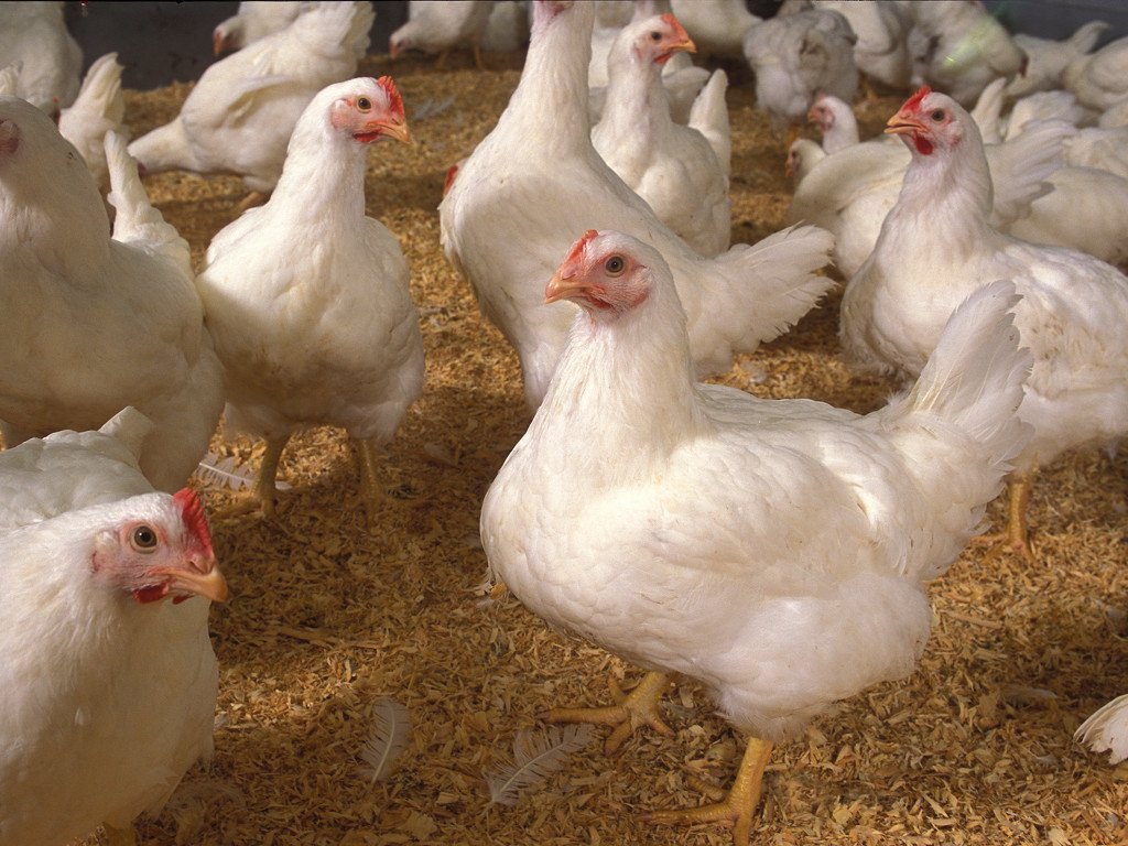 best management practices in poultry