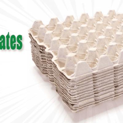 paper egg crate