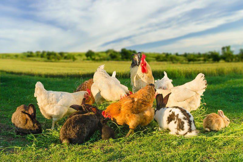 PoultryUniversity