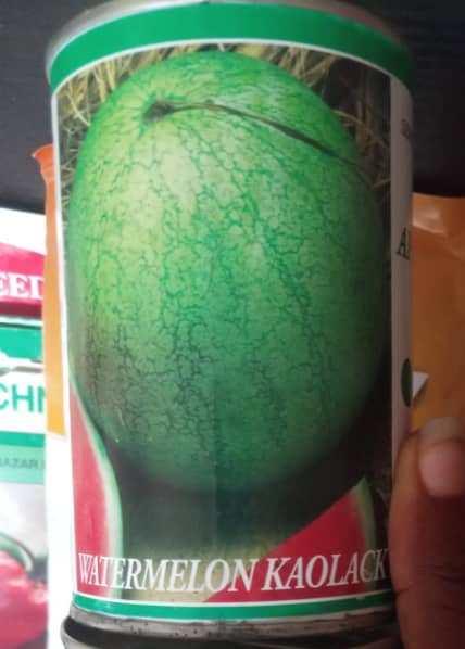 watermelon kaolack