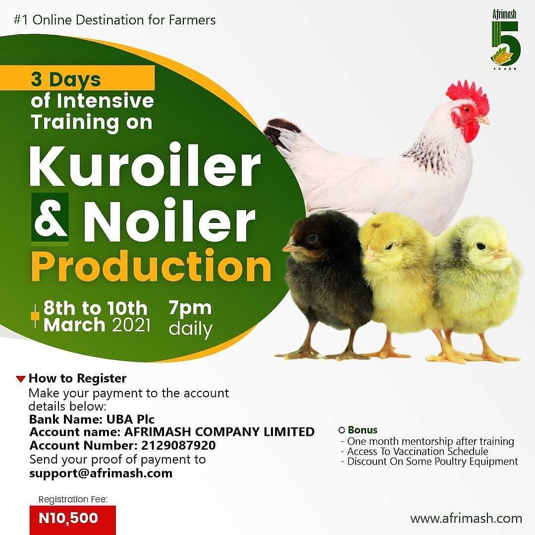 kuroiler and noiler production