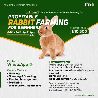 rabbit farming for beginners