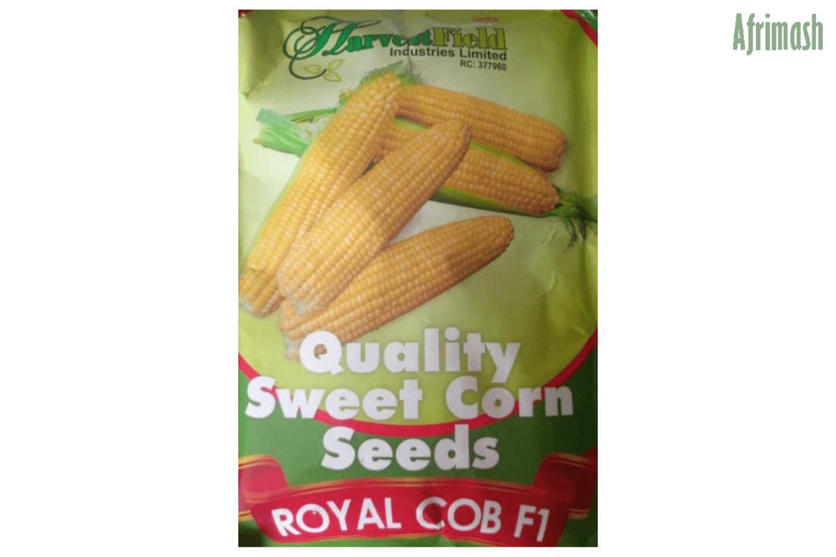 royal cob sweet corn