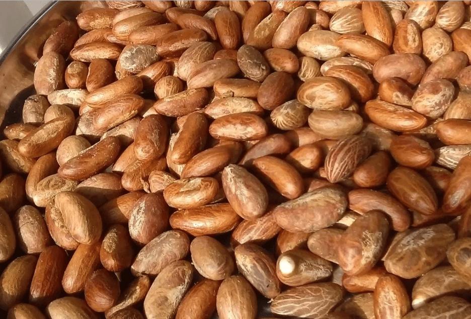 Bitter Kola Seedling