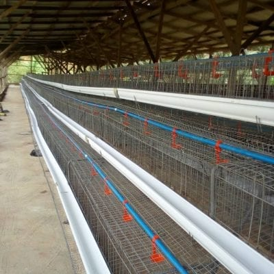 120 capacity battery cages
