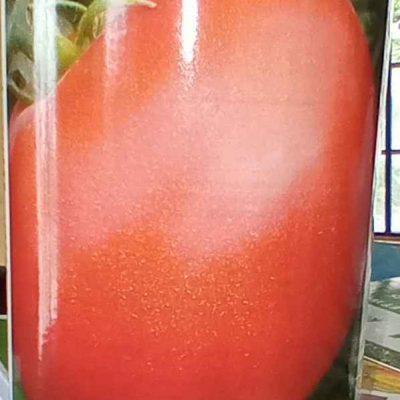 Tomato Rodeo 14 F1