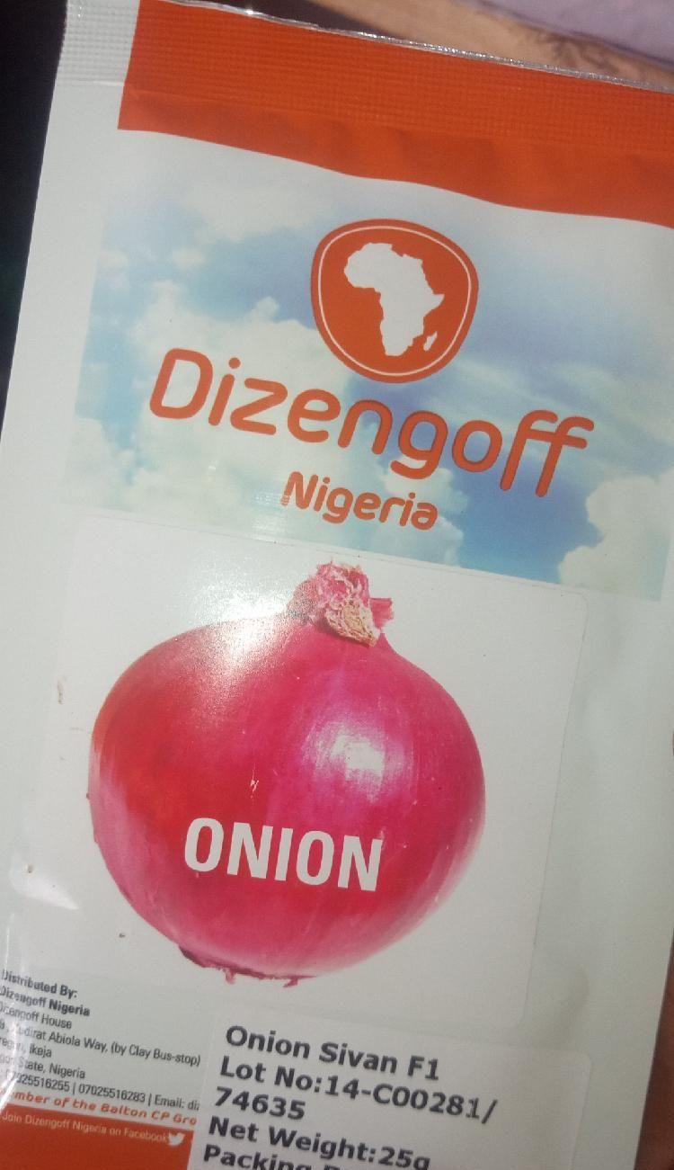 Onion Sivan F1