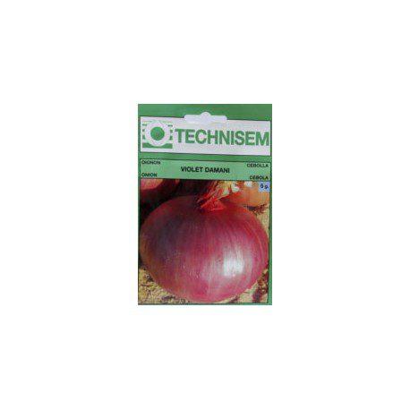 Onion Violet Damani